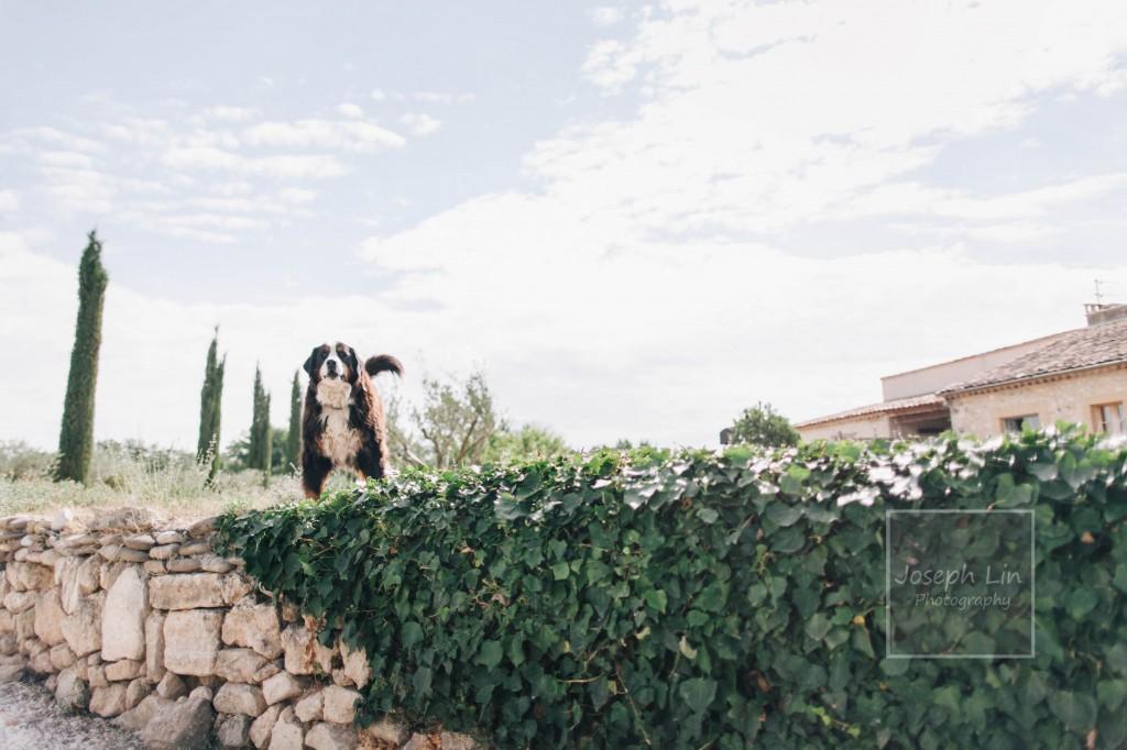 Suzanne David 0007 1024x682 Aix En Provence   Suzanne & David